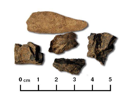 Conjunto de ossos carbonizados