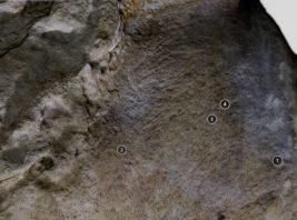 Gravura de Equídeos | Gruta do Escoural